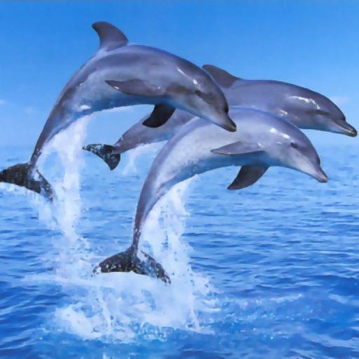 【免費個人化App】Delfines Live Wallpaper es 1-APP點子