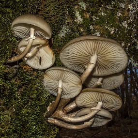 el intruso by Miguel Lopez De Haro - Nature Up Close Mushrooms & Fungi ( Mushroom )