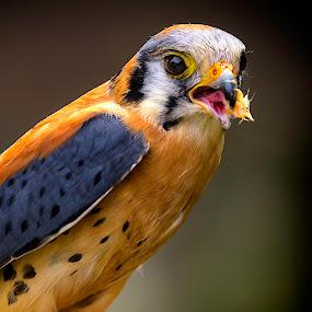 Hungry by Lee Jorgensen - Animals Birds ( bird, animals, san francisco zoo, zoo, wild animals,  )
