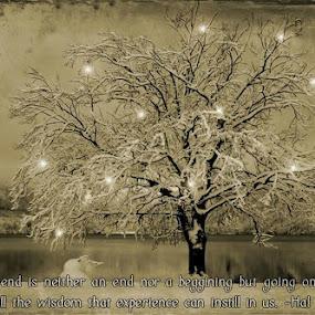 Wish you a peaceful Christmas and prospreous New Year by Jože Borišek - Uncategorized All Uncategorized ( bohinj-slovenia )