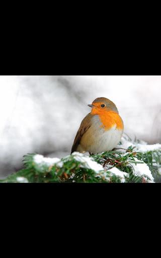 Winter Birds Snowfall LWP