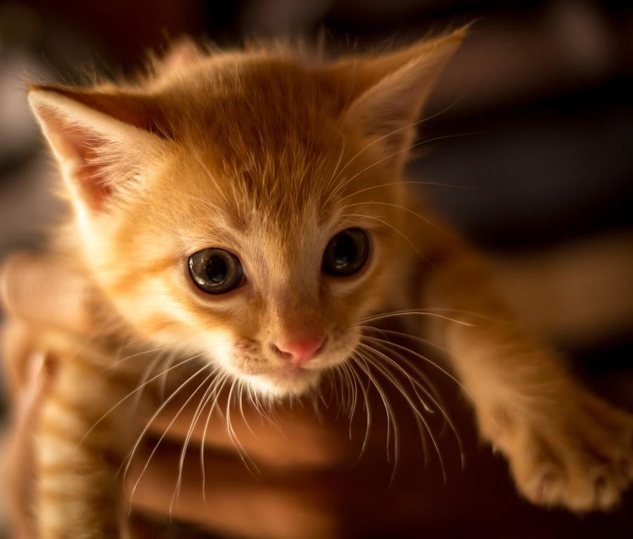 Skeptic by Madhujith Venkatakrishna - Animals - Cats Portraits (  )