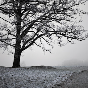 Winter Fog by Randi Grace Nilsberg - Nature Up Close Trees & Bushes ( foggy, cold, tree, fog, frost, misty, mist )
