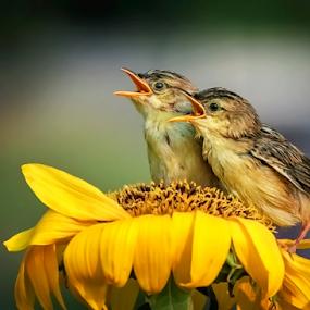 Tiny Birds by Husada Loy - Animals Birds