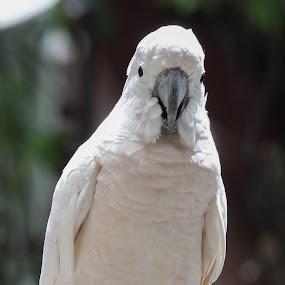 by Kumarasamy Selvarajoo - Animals Birds