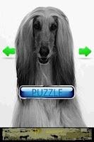 Screenshot of Dog Puzzle: Afghan Hound