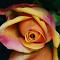 aIMG_4908_cr.jpg