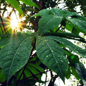 Cahaya Menerusi Ruang Daun by aRie Fitri - Novices Only Flowers & Plants ( cahaya, daun, matahari, leaf, light, sun )