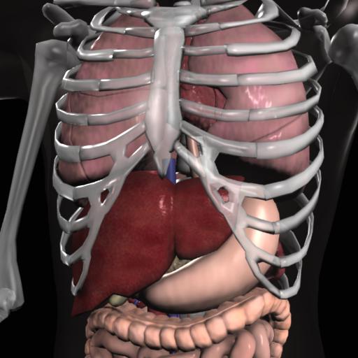 Anatomy 3D: Organs 醫療 App LOGO-硬是要APP