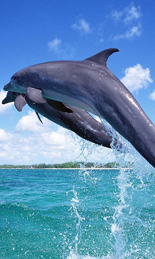 Дельфіни Живі Шпалери