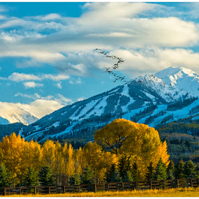 Heading South by George Kremer - Landscapes Mountains & Hills ( skiing, fall colors, colors, colorado, yellow, aspen, mountains, ski mountains, fall, snow, trees, geese, canada geese, color, colorful, nature,  )