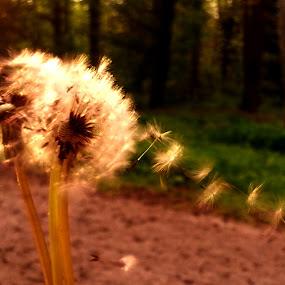 by Terteci Dan - Flowers Flowers in the Wild