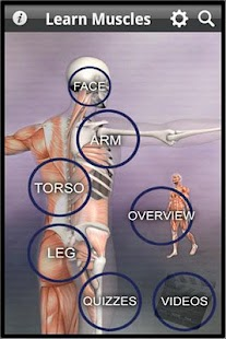 Learn Muscles: Anatomy - screenshot thumbnail