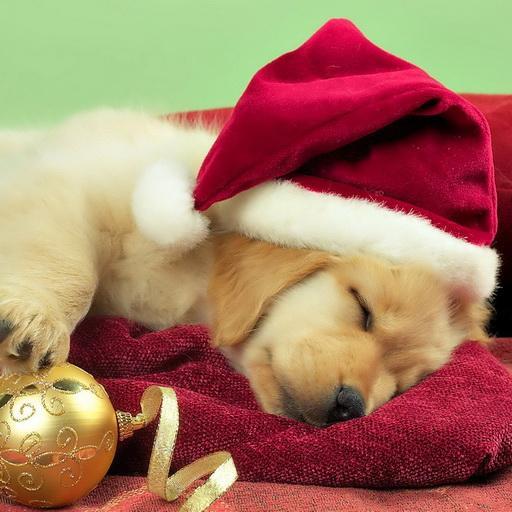 Christmas Dogs wallpaper