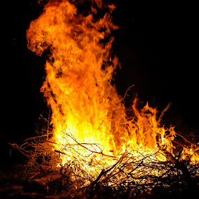 sittin by the fire by Cliff Dowden - Nature Up Close Trees & Bushes ( flames, brisk, fall, campfire, marshmellows,  )