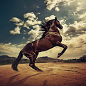 Horse 3D Live Wallpaper icon