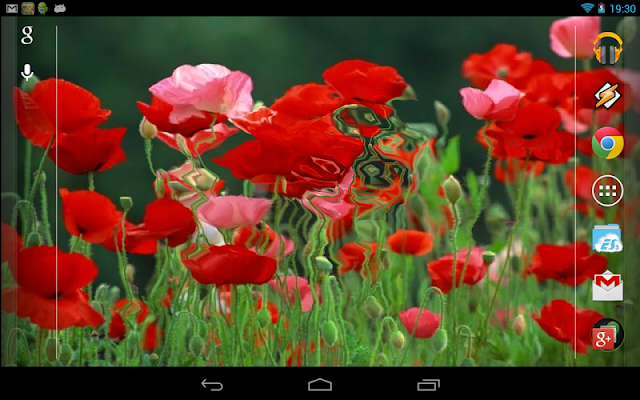 Red Poppies 3D Wallpaper - screenshot