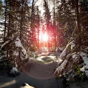 Forest of Glava by Kjell Kasin - Landscapes Forests ( samyang, winter, snow, sunflare, d610, forest, nikon, sun )