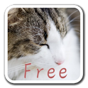 CatWall FREE -LiveWallpaper icon