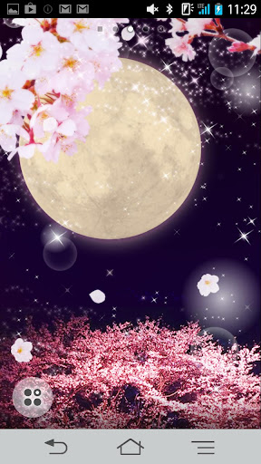 Cherry Blossoms Full Moon
