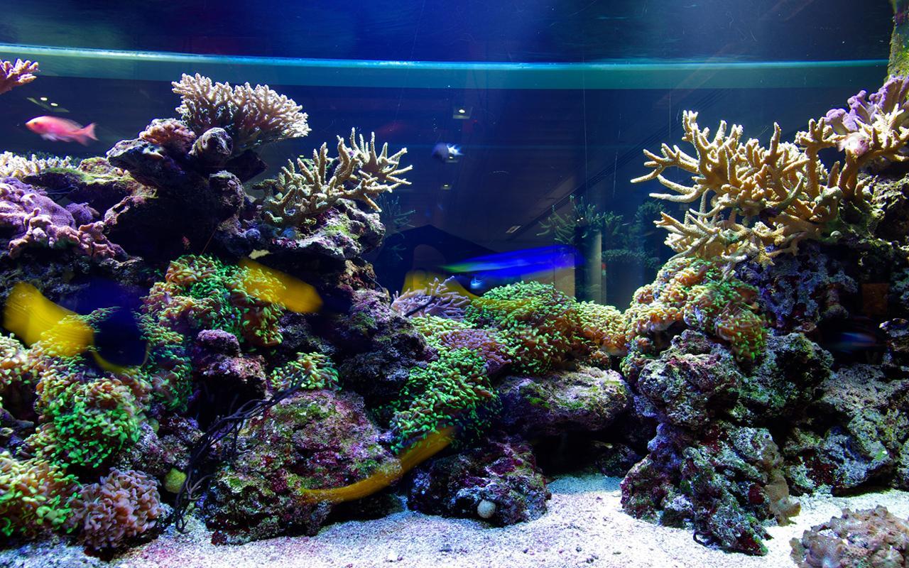Connu Aquarium Fond d'écran animé – Applications Android sur Google Play WR41