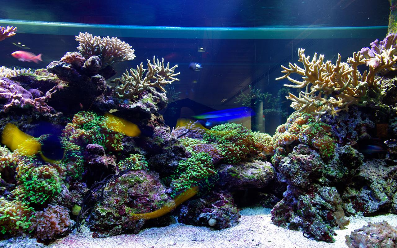 Aquarium live wallpaper android apps on google play for Aquarium fish online