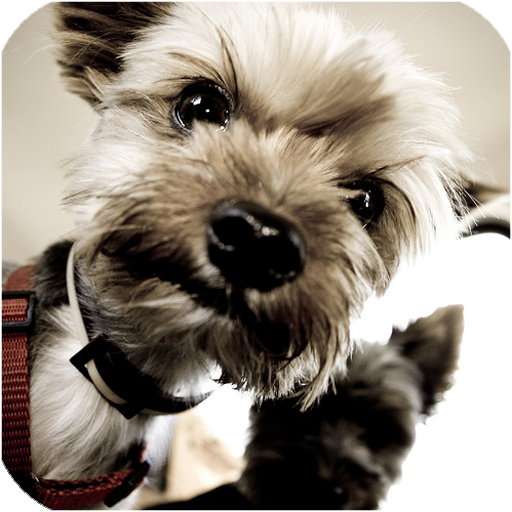 娱乐の犬の名前 LOGO-記事Game