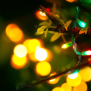 xmas lights.jpg