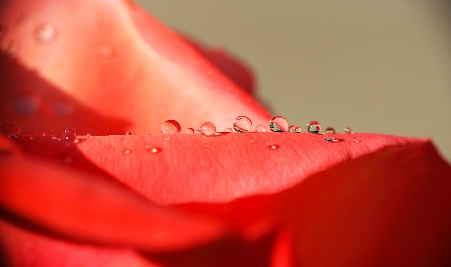 Life is Beautiful  by KD Chauhan - Nature Up Close Natural Waterdrops