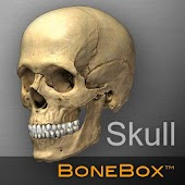 BoneBox™ - Skull Viewer
