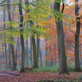 Autumn Shades by Ceri Jones - Landscapes Forests ( season, autumn, trees, woodland, forest, woods )
