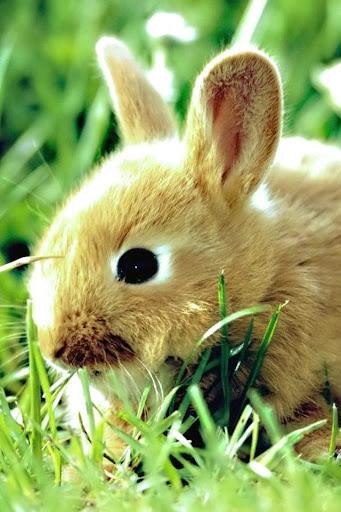 Rabbits Magic LIve Wallpaper