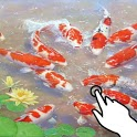 Magic touch: Oriental koi fish icon