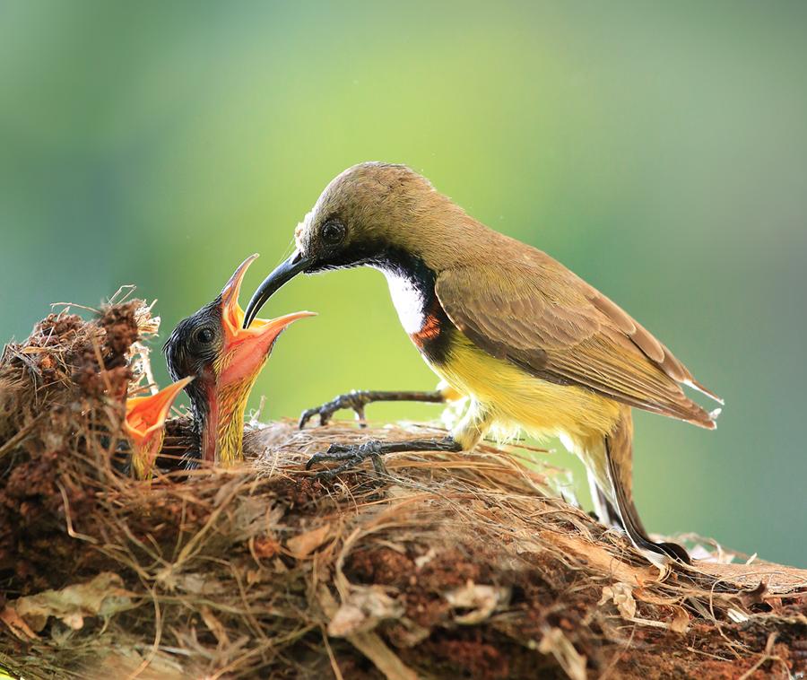 by Prachit Punyapor - Animals Birds ( love, babies, share, new born, family, feeding, birds )
