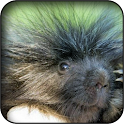 Porcupine Wallpapers icon