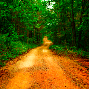 by Joel Eade - Transportation Roads ( peaceful, awesome, dirt road, beautiful, forest, road, dirt, pretty, country,  )