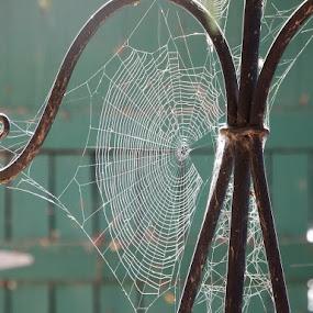 Web by Dave Davenport - Nature Up Close Webs ( webs, cobweb, spiderweb, web, spider web,  )