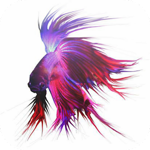 Download siamese fighting fish apk on pc download for Siamese fighting fish crossword