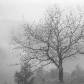 Fog by Aleksandar Filipović - Landscapes Weather ( nature, fog, serbia, morning, landscape )