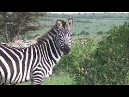 Screenshot of Video Touch Lite