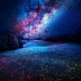 Milky Way by Sebastien Gaborit - Landscapes Prairies, Meadows & Fields