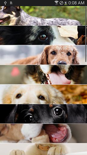 【無料】犬の壁紙・写真集 vol.6
