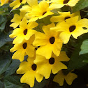 Sunny Lemon Star