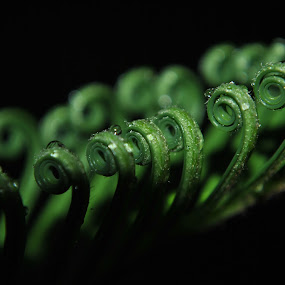 Green Curls by Sergio Yorick - Nature Up Close Leaves & Grasses ( nature, green, nature up close, leaves, close up, black,  )