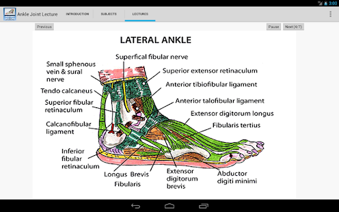 Anatomy of the Ankle Joint- screenshot thumbnail