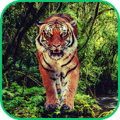 Tiger Hunter 2014