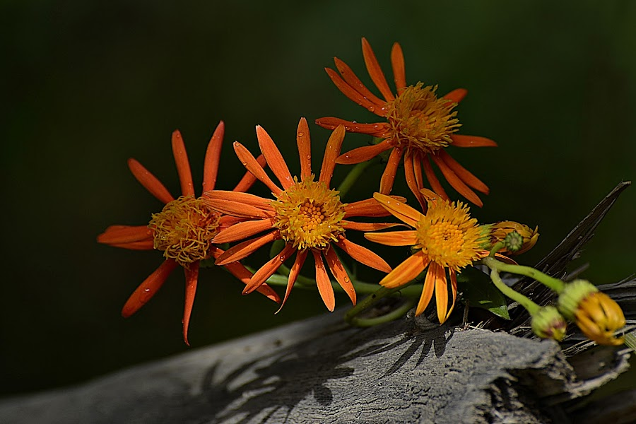 by Muhammad Farooq - Flowers Flowers in the Wild