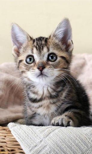 귀여운 새끼 고양이 배경 화면