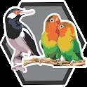 Master Burung Kicau icon