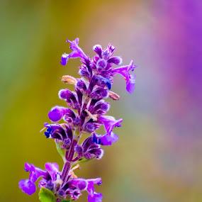 Purple by Khaled Noaman - Flowers Flowers in the Wild ( color, colors, filter forge, object, landscape, portrait,  )